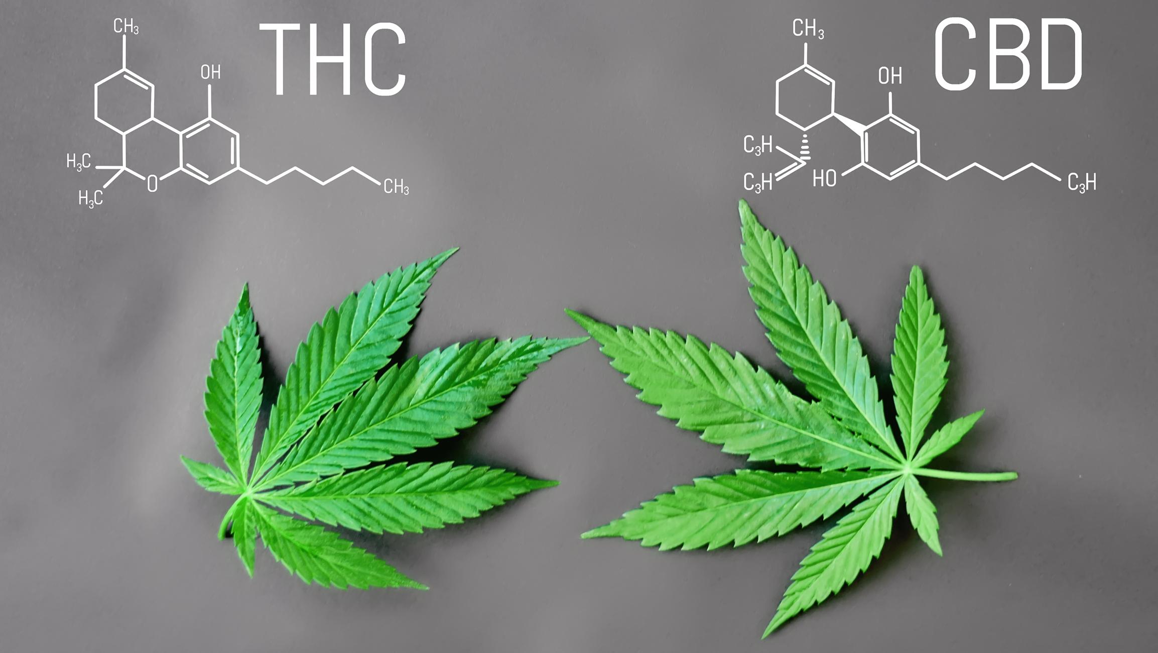 CBD legal cannabis medical virtues: anti-inflammatory, analgesic, anxiolytic, etc. CBD and THC formula. Thematic photos of hemp and green ganja. Background image