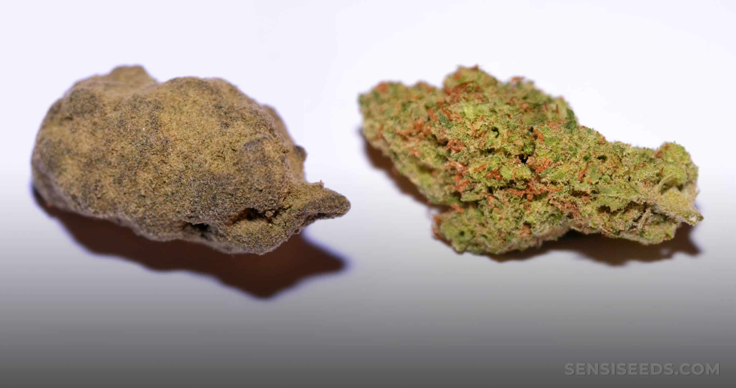 Hash Vs. Weed The Difference