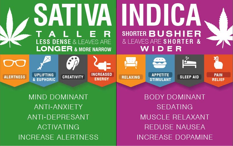 Sativa or Indica Anxiety