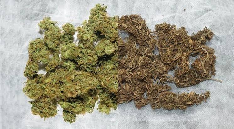Difference Between Medical and Regular Marijuana