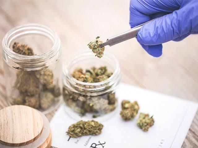 What Is Regular Marijuana